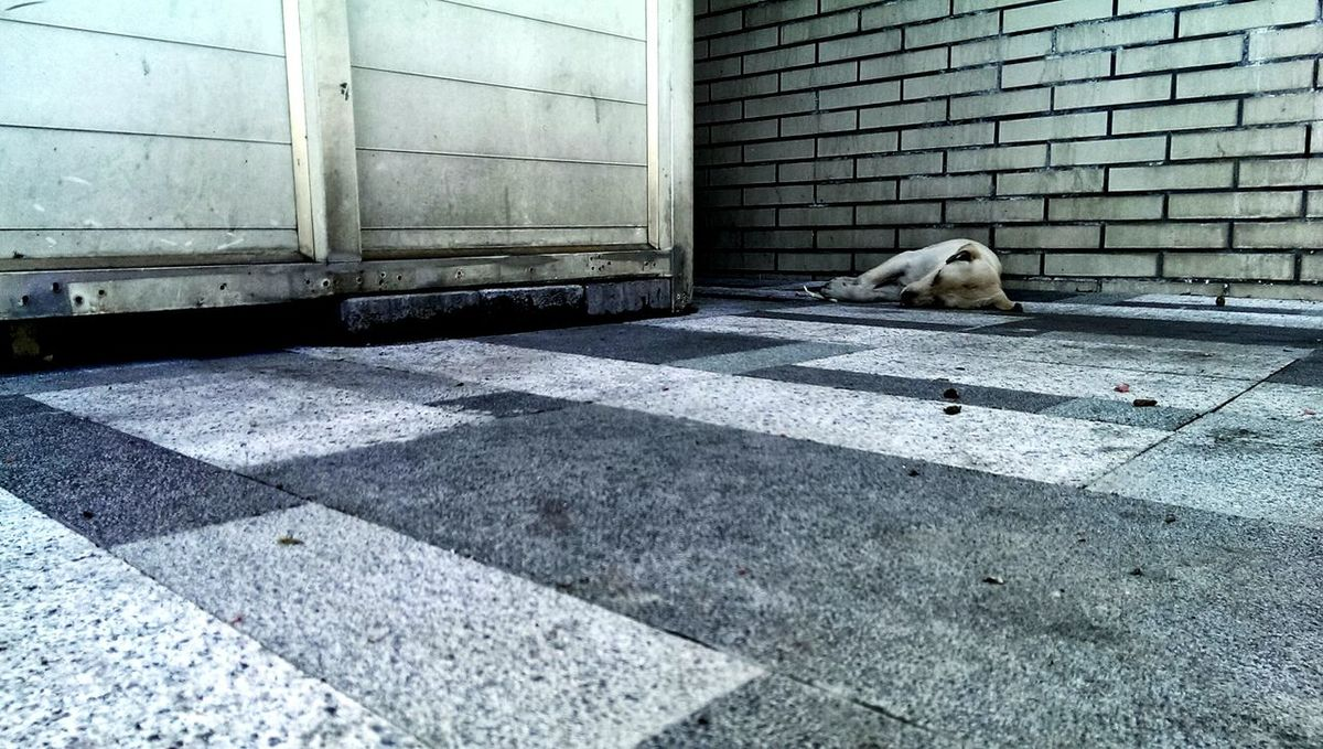 Dog Love Dogslife Dogstagram Getting Inspired Streetphotography Street Dog Street Life Dog Life Animal Themes Homeless Homeless Dogs Textures And Surfaces