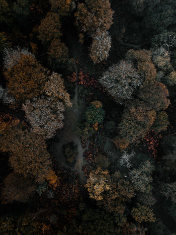 Autumn Forest drone view No People Plant Nature Sea Coral Growth High Angle View UnderSea Water Underwater Tree Day Beauty In Nature Outdoors Reef Tranquility Full Frame Marine