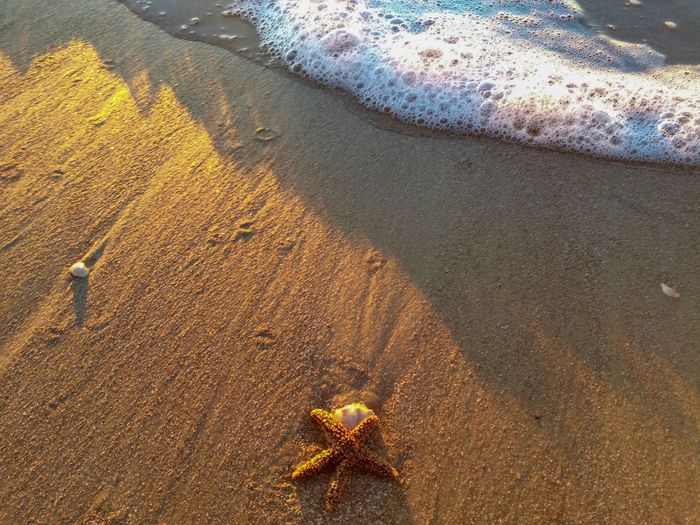 High angle view of starfish on shore at beach
