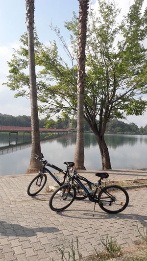 Sport Bikes Tree Water Tree Area Lake Bicycle Tree Trunk Mountain Bike