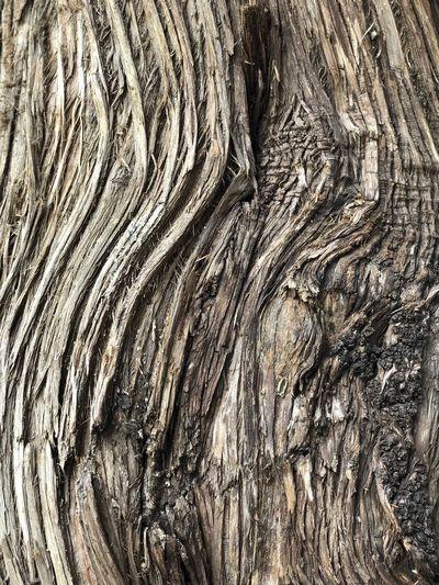 Bermuda Cedar/ Juniper Tree - Juniperus bermudiana Full Frame Backgrounds Pattern Textured  No People Tree Close-up Tree Trunk Trunk Bark Nature Day Outdoors Rough Natural Pattern