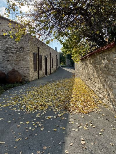Sunlight falling on footpath amidst buildings during autumn