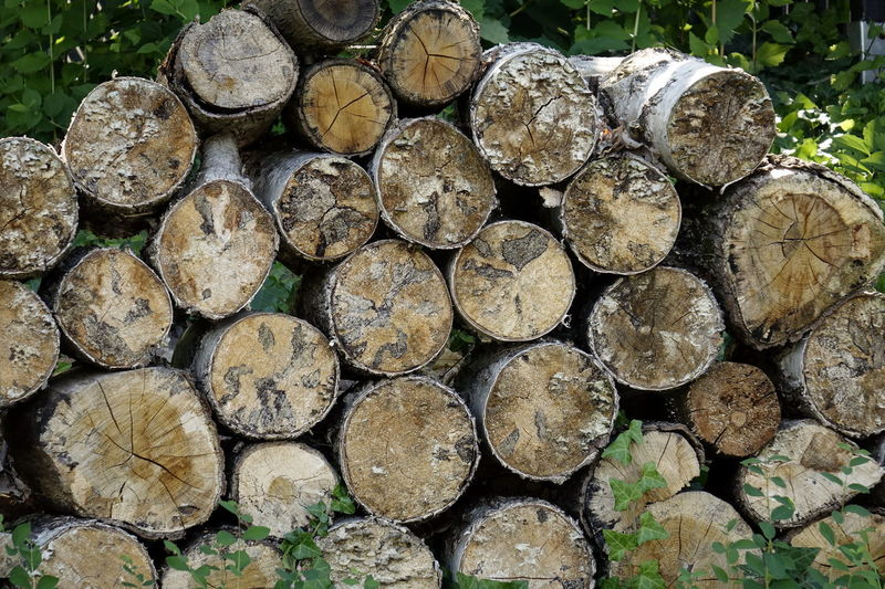Abundance Arrangement Backgrounds Close-up Day Deforestation Environmental Issues Firewood Forestry Industry Heap Large Group Of Objects Log Lumber Industry No People Outdoors Pattern Pile Shape Stack Textured  Timber Tree Ring Tree Trunk Wood - Material Woodpile