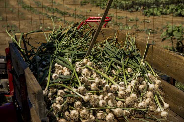 Farm Life Farmstead Farmstand
