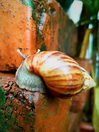 Animal Themes One Animal No People Outdoors Nature Snail Photography Beauty In Nature Full Frame Snails Snail🐌 Snail Nature Snail Collection Snail ❤ Snail Closeup Snail Hunting Insect Insects  Snails🐌 Insects  Growth