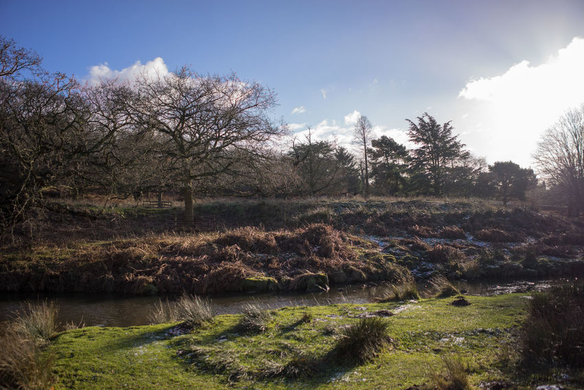 Bradgate park along side a river birds flying all around Birds Blue Cloudy Sky Bradgate Park Along Side A River Birds Flying All Around Bushes Countryside Day Daytime Deer Ducks Green Grass Nature Plant Rural Stream Trees Water_collection Wintertime