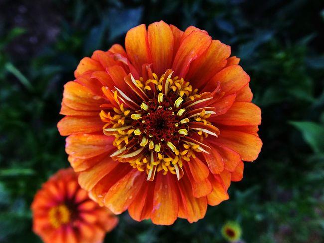 Flower Nature Taking Photos Relaxing Hello World Open Edit EyeEm