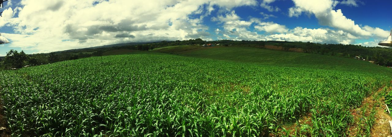 Countryside Greeneries Cornfield Mountains Azure Sky Hometown Stressfree Godscreation Scenic Stress Reliever Backyard Nature Nature Lover