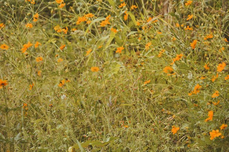 Full frame shot of small plants on field