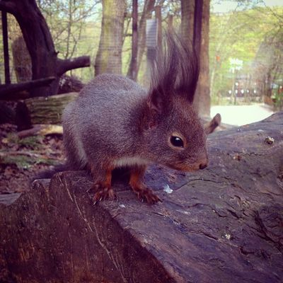 Animal Themes Animals In The Wild Day Forest Nature One Animal Outdoors Side View Squirrel Tree Wildlife