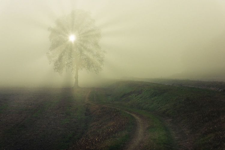Rays Of Light Sunlight Beauty In Nature Day Field Fog Foggy Grass Hazy  Landscape Mist Nature No People Outdoors Scenics Sky Tranquil Scene Tranquility Tree