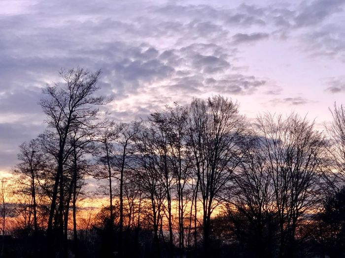 Sky Cloud - Sky Sunset Tree Tranquility Beauty In Nature Silhouette