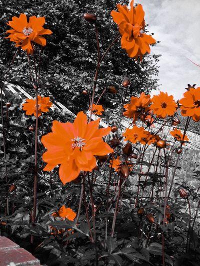 University Of York Autumn Secret Garden Fortheloveofblackandwhite