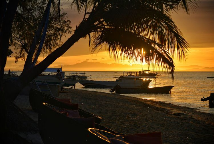 Catching creator's forever promise to start the day off 🙏 Coconut Trees Relaxation Chilling Seashore Beach Silhouette Cebu Malapascua Travelph Nature Getaway  Sunrise Sun Easter Spring Summer Vacations Islandlife Romantic Morning Tree Water Sunset Shadow Sailboat Marina