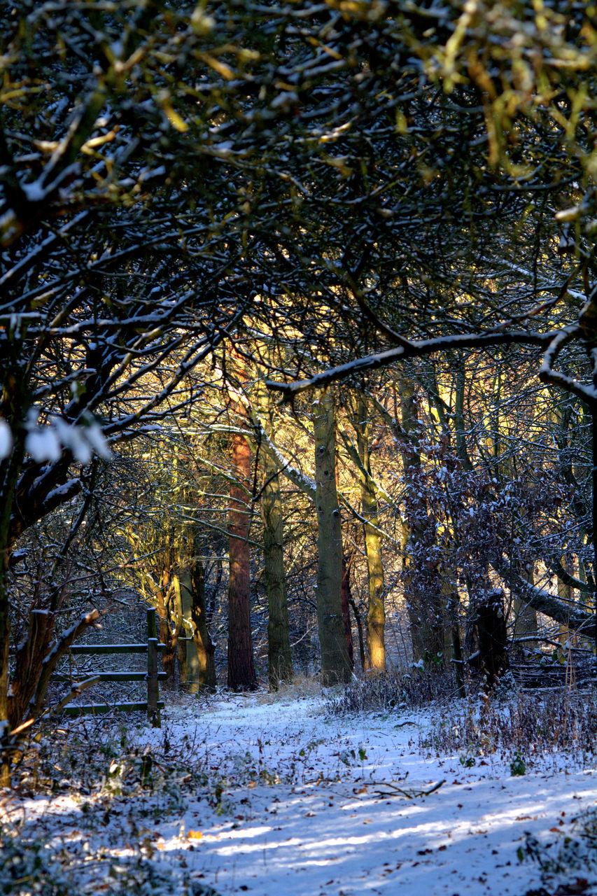winter, tree, snow, nature, cold temperature, tranquility, tranquil scene, outdoors, no people, branch, scenics, beauty in nature, day, forest