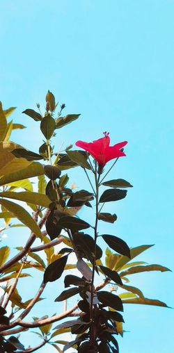 Leaf Petal Growth Nature Flower Clear Sky Low Angle View