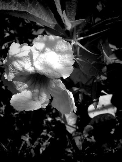 Fragility Flower Nature Plant Beauty In Nature Flower Head Petal Freshness