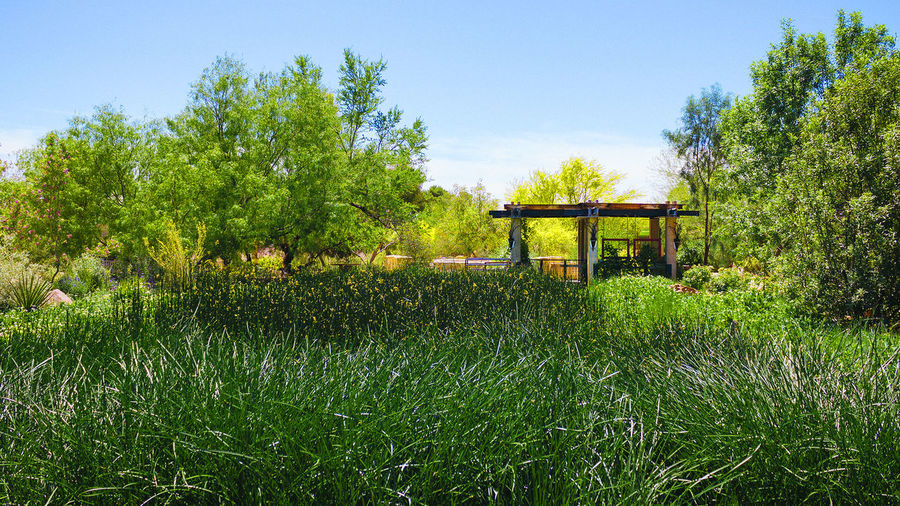 State Museum's Spring Preserve Garden Architecture Beauty In Nature Blue Built Structure Clear Sky Day Field Formal Garden Freshness Gazebo Green Color Growth Idyllic Nature No People Outdoors Park - Man Made Space Plant Remote Scenics Sky Solitude Tranquil Scene Tranquility Tree