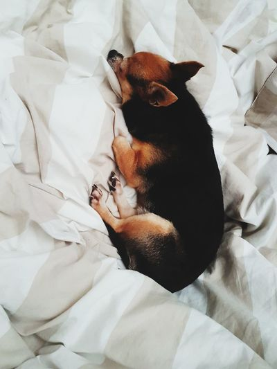 High angle view of a dog resting on bed