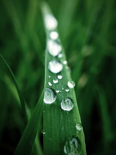 Grass After The Rain Raindrops Drop Green Color Wet Water Leaf Plant Part Close-up Plant Growth Freshness Nature Beauty In Nature Vulnerability  Fragility Day No People Focus On Foreground Selective Focus Outdoors Dew