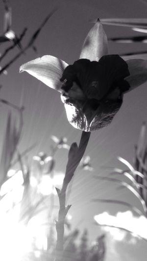 Destellos De Luz Destello De Sol Blackandwhite Flower Macro Photography Nature Photography Siluet Colombia ♥
