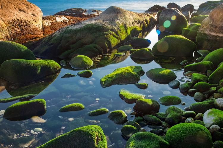 Water UnderSea Sea Underwater Beach Water Plant