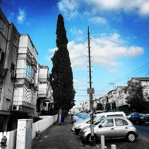 "אחה""צ בדרך הביתה.... Tree Ramatgan Walk Webstagram israel_hdr israel israel_best israelinstagram israelphotooftheday pictureoftheday photooftheday mediterranean love insta_global instagram instagramer instamood instacool instagood"