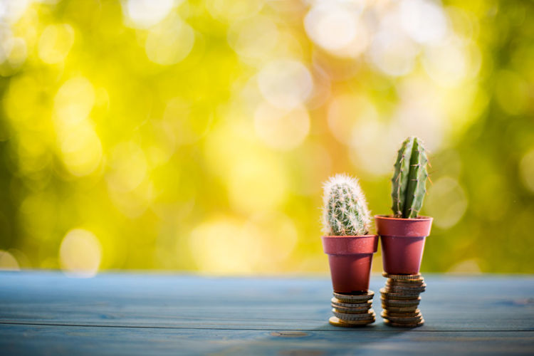 Copy Space Bright Brightly Lit Close-up Day Finance And Economy Focus On Foreground Food Food And Drink Green Color Growth Lens Flare Money Nature No People Outdoors Plant Selective Focus Sunlight Surface Level Table Tree Vibrant Color Wood - Material Yellow