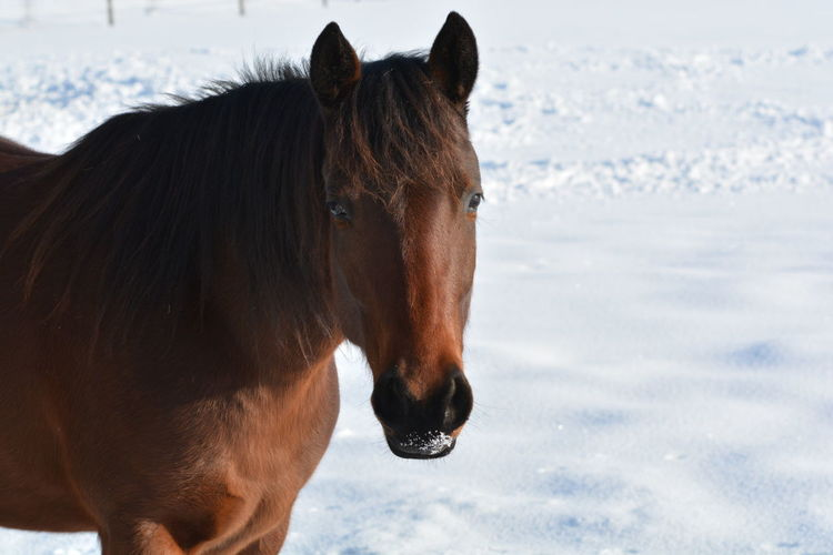 Horse standing in snow
