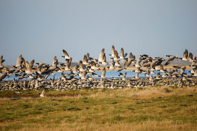 Birds Flying Over Grassland