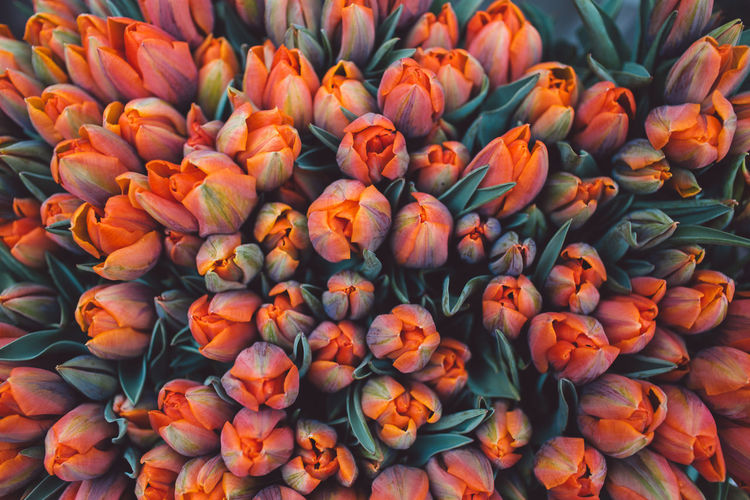 Netherlands Tulips Abundance Backgrounds Beauty In Nature Bunch Of Flowers Close-up Flower Flower Head Flowering Plant Flowers For Sale Fragility Freshness Full Frame High Angle View Inflorescence Large Group Of Objects Market No People Outdoors Petal Plant Retail  Retail Display Spring Vulnerability