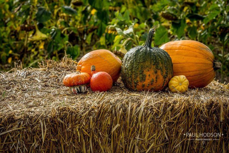 Pumpkins and
