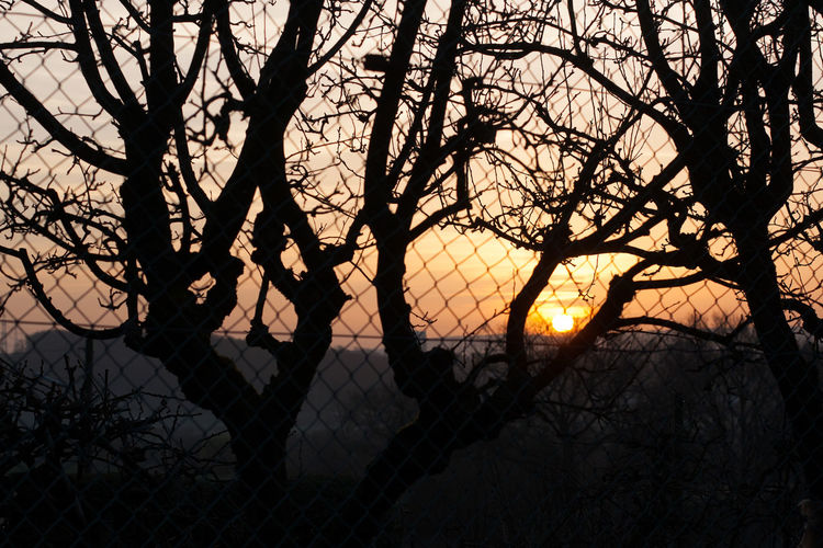 Silhouette bare trees against sky during sunset