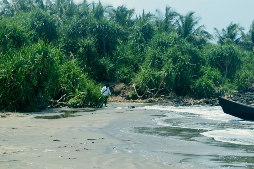 Sand Tree Beach Nature Water Day Growth Palm Tree Outdoors Tranquility Tranquil Scene No People Beauty In Nature Plant Scenics Sea Grass Sand Dune Sky Landscape Tranquility Travel Saintmartinisland Bangladesh