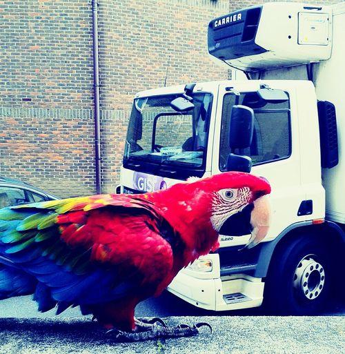 Oddities in London London Parrot Exotic Pets Urban Vs Rural