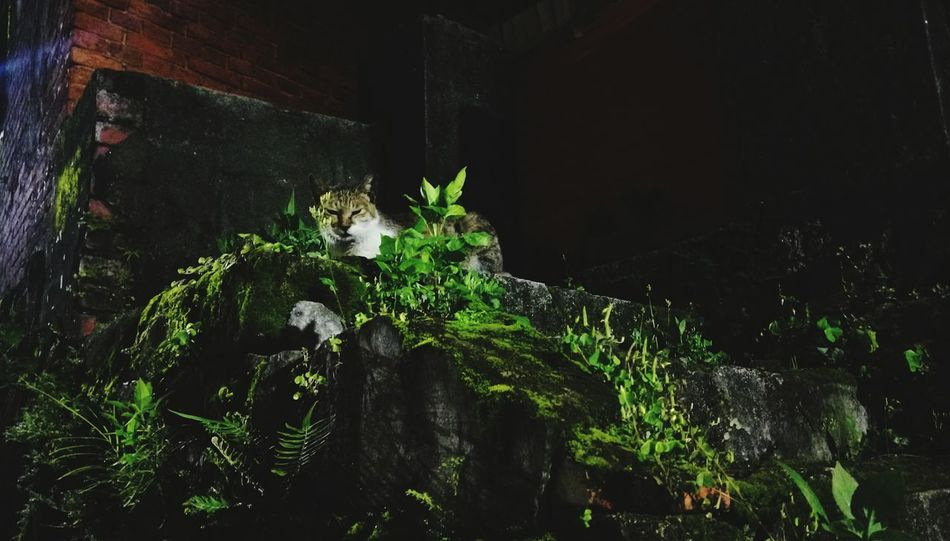 The Great Outdoors With Adobe Cat Watching Night Cat Streetphotography Night Life Green Leaf Plant Amazing Nature Plant Life Hidden Faces Hidden Cat Cat Photography Alley Cat 貓 Katze The Wizard Of Oz 街貓 The Street Photographer - 2016 EyeEm Awards Nature's Diversities Cities At Night Pet Portraits