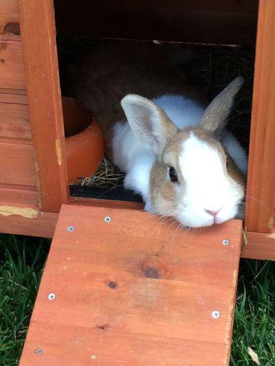 My rabbit 🐰🐰