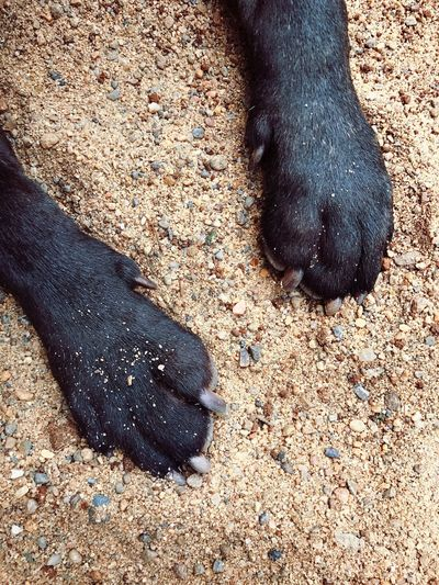 Low section of black dog on sand
