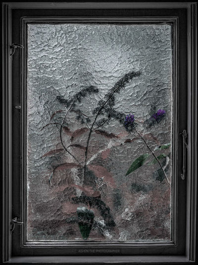 Through the window Beautiful Beautiful Nature EyeEm EyeEm Best Edits EyeEm Best Shots EyeEm Nature Lover EyeEm Gallery EyeEmBestPics EyeEmNewHere Light Lights Nature Nature On Your Doorstep Nature Photography Art Beauty Beauty In Nature Flower Fragility Light And Shadow Nature_collection Naturelovers Plant Shadow Window