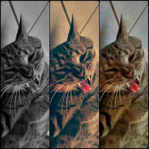 Cat Cat Lovers Cat♡ Belong Anywhere