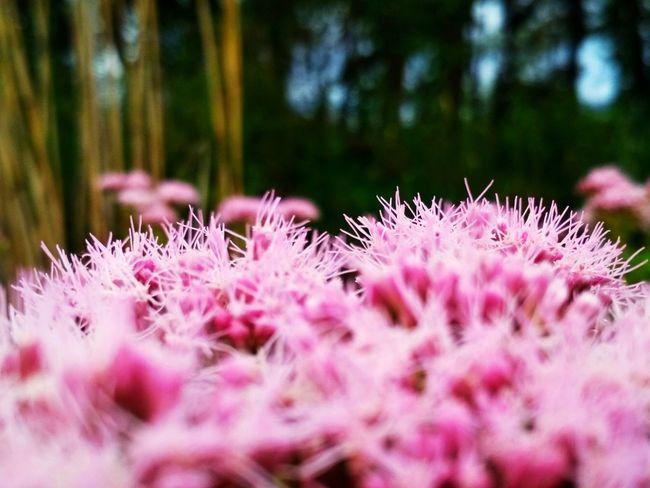 Flower Flower Head Pink Color Springtime Close-up