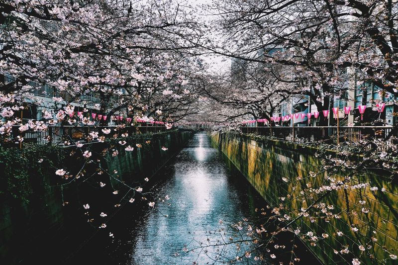 Blossom Tree Flower Growth City Water Nature Canal Rhododendron Spring Beauty In Nature No People Outdoors Day Millennial Pink
