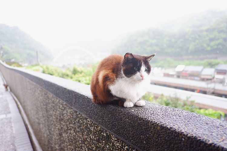 Chubby cat Aroundtheworld Travel Taiwan Cat Village Animal Themes Mammal Animal One Animal Domestic Pets Domestic Animals Vertebrate No People Day Cat Sitting Domestic Cat Transportation Focus On Foreground Relaxation Looking Nature Retaining Wall Feline