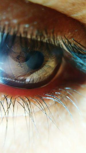 Human Eye Iris - Eye