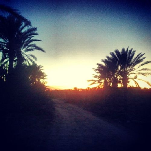 Sunrise Pamtree Lights Douz Tunisie Tunisia
