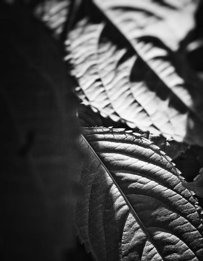Outdoors Day Shadow Close-up No People Blackandwhite Light And Shadow Summer Real Life по утру Nature Beauty In Nature Selective Focus Black And White Photography