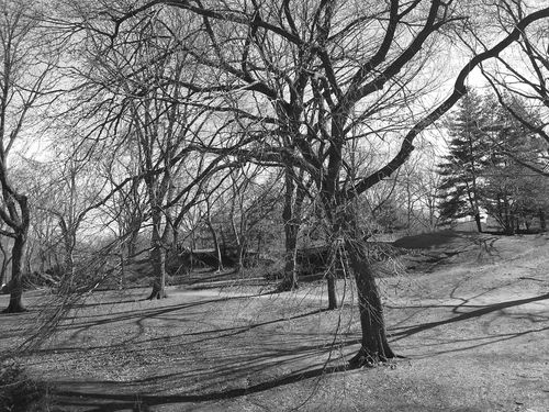 Central Park by day Central Park New York City Beauty Of Nature Black And White Black And White Photography Landscape_photography