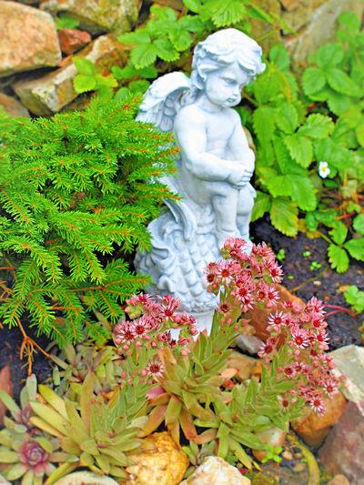 Gartengestaltung Statue Sculpture Plant Outdoors No People Nature Male Likeness Leaf Human Representation Green Color Flower Female Likeness Engel Statuen Day Close-up Gartenglück EyeEmNewHere Engelfigur Auf Pinie