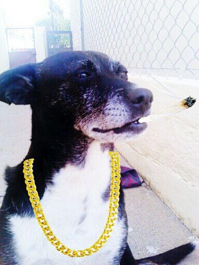 ·soon the world will love you sweet leaf🌿· Dog Animal Snoopdogg Black Sabbath Weed Thug Thug Life OutLaw Dog Love