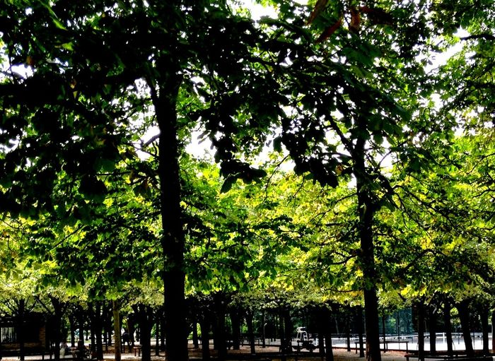 Tree Growth Nature Low Angle View Outdoors Green Color Beauty In Nature
